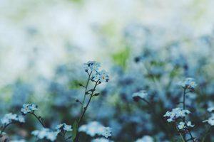 Blog: Vergeet-Me-Niet - Persoonlijk afscheid